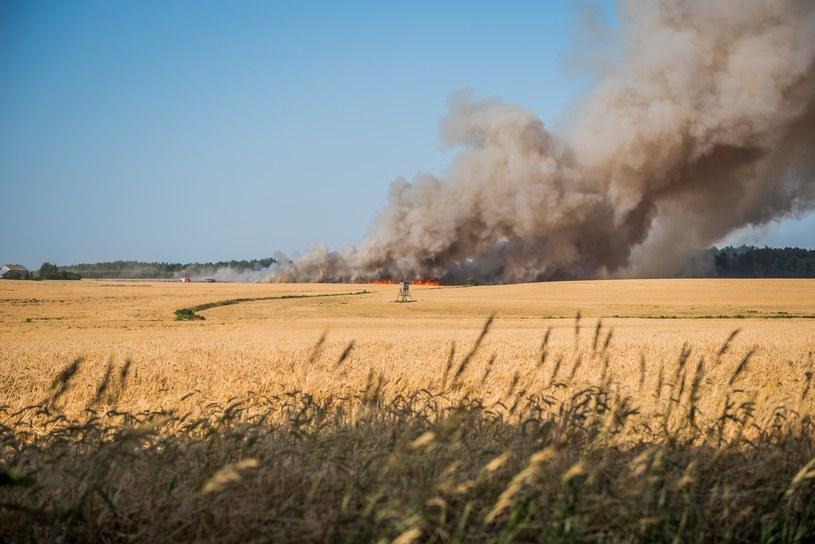 Pożar pól podczas suszy /Marcin Bruniecki /Reporter