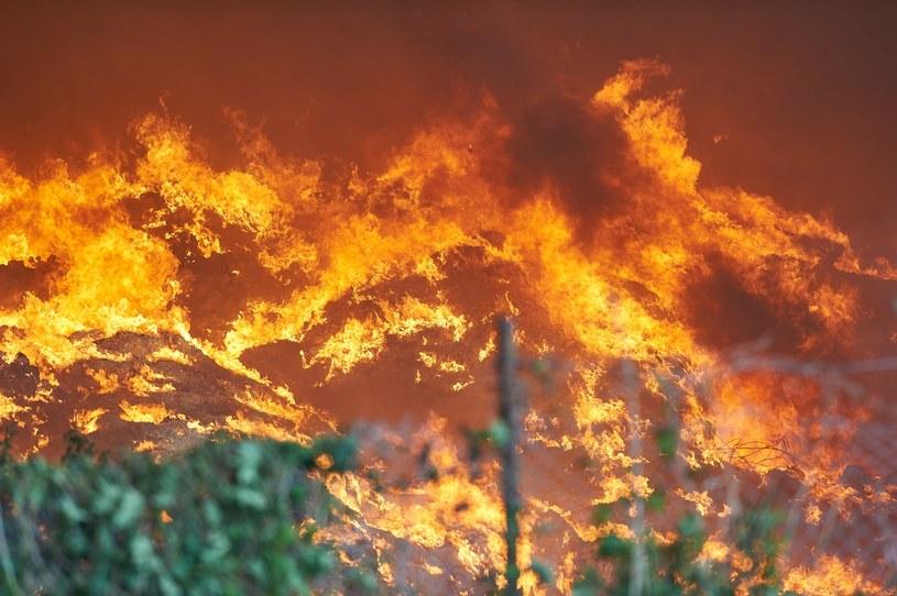 Pożar składowiska odpadów w Zgierzu /Fot. Lukasz Szelag /Reporter