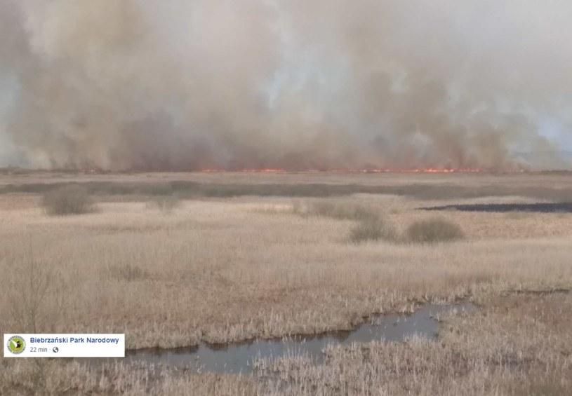 Pożar w Biebrzańskim Parku Narodowym /Biebrzański Park Narodowy /facebook.com