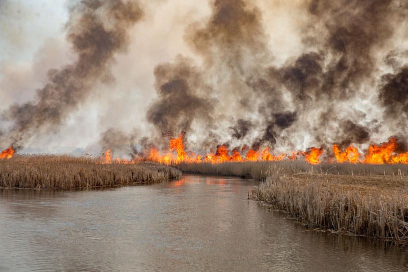Pożar w Biebrzańskim Parku Narodowym /Marek Maliszewski  /Reporter