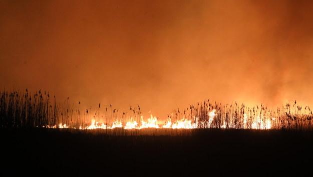 Pożar w Biebrzańskim Parku Narodowym / Artur Reszko    /PAP