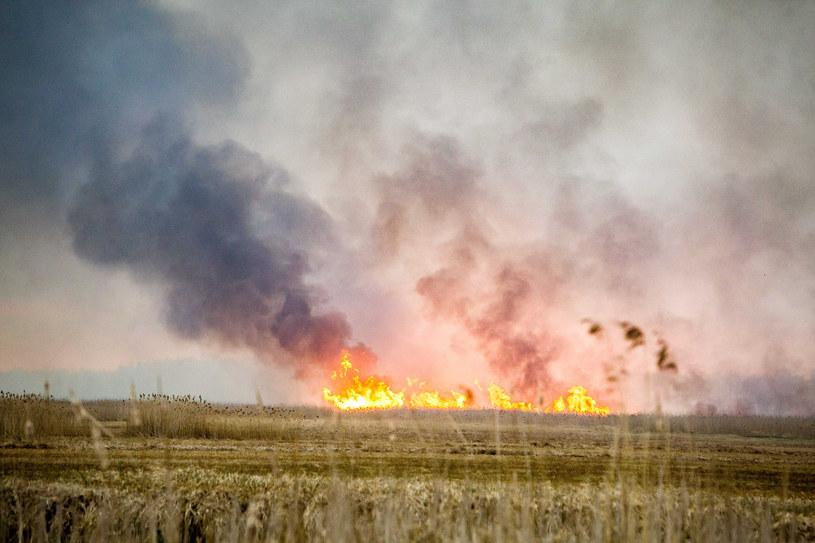 Pożar w największym parku narodowym w Polsce /Marek Maliszewski  /Reporter