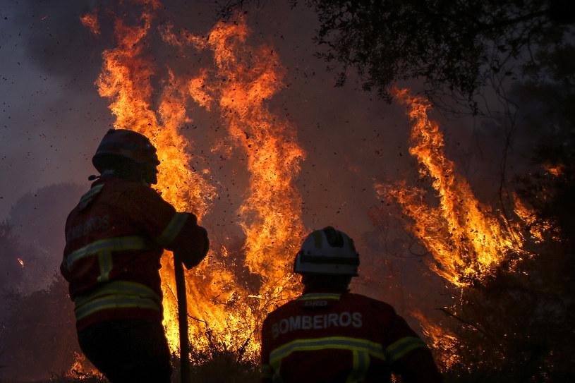 Pożar w Portugalii (arch.) /AFP
