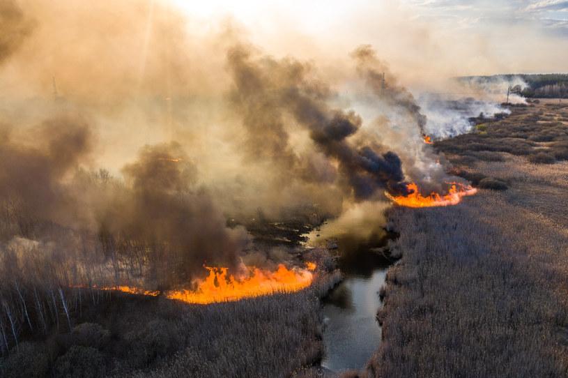 Pożar w zamkniętej strefie wokół nieczynnej elektrowni atomowej w Czarnobylu na Ukrainie dotarł do miasta Prypeć /VOLODYMYR SHUVAYEV /AFP