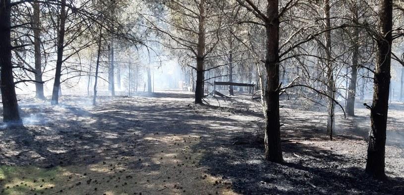 Pożar Wdzydzkiego Parku Krajobrazowego /Komenda Powiatowa PSP w Kościerzynie /facebook.com