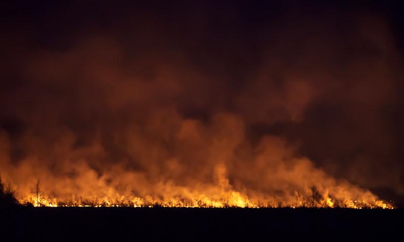 """""""Pożarami zombie"""" naukowcy określają takie kataklizmy, które przetrwały zimę / Olexey Nikonchuk   /123RF/PICSEL"""