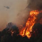 Pożary lasów. Klimatolog: Światowa plaga spowodowana przez globalne ocieplenie