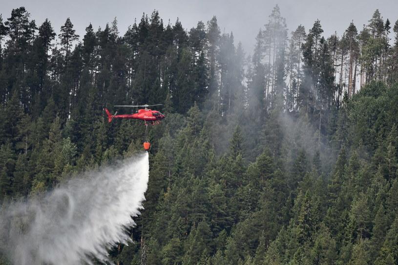Pożary lasów w Szwecji są spowodowane nietypowymi tam wysokimi temperaturami i małą ilością opadów /Robert Henriksson /PAP/EPA