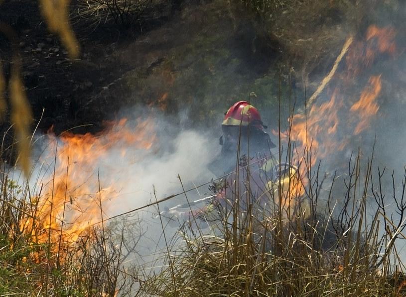 Pożary na Majorce - ewakuowano ok. 700 osób. /AFP
