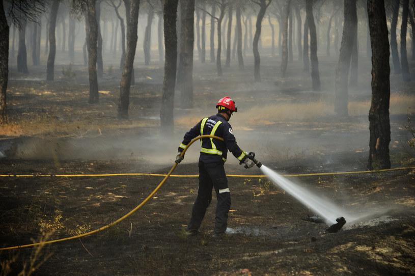 Pożary w Andaluzji, zdj. ilustracyjne /CRISTINA QUICLER / AFP /AFP