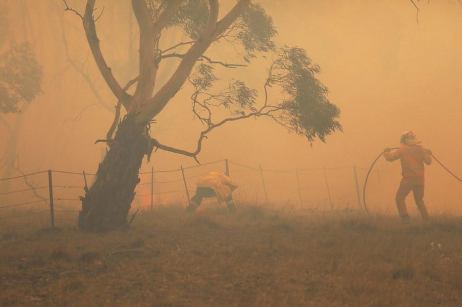 Pożary w Australii spowodowały ogromne straty /SEAN DAVEY  /PAP/EPA