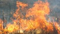 Pożary w Grecji i Szwecji. Jak walczyć z żywiołem?