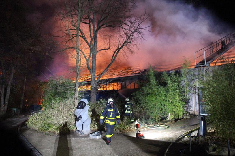 Pożat w zoo w Krefeld /DPA/Associated Press/East News /