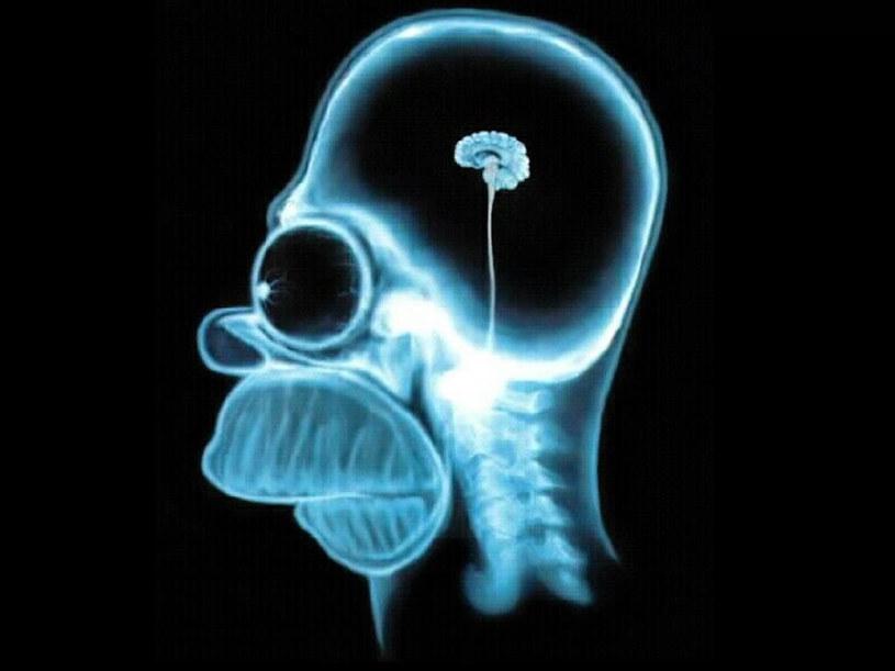 Poziom ludzkiej inteligencji stale się obniża. Obyśmy tylko nie skończyli jak Homer Simpson! /AFP