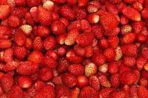 Poziomka – więcej niż smak maleńkich owoców