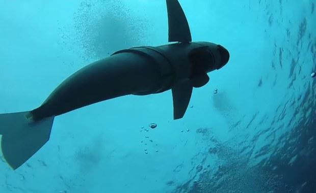 """Poznaj SoFi - specjalnego """"rybiego robota"""", który pomaga w badaniu oceanu"""