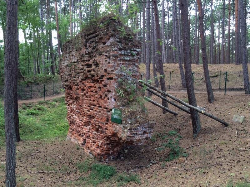 Pozostałości dawnej Łeby ukryte są w lesie /Kuba Kaługa /RMF FM