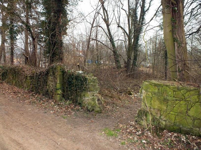 Pozostałości muru otaczającego niegdyś park pałacu w Nowym Kościele                            Fot.: Szymon Wrzesiński /