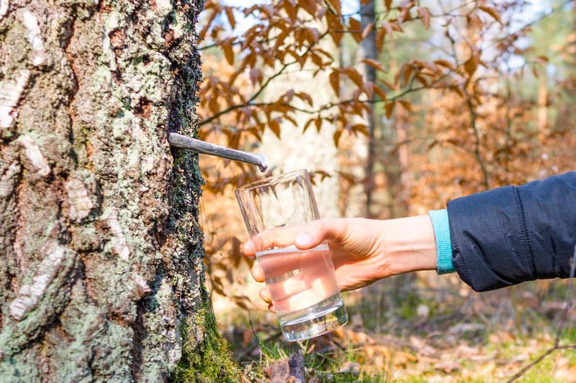 Pozyskiwanie soku /©123RF/PICSEL