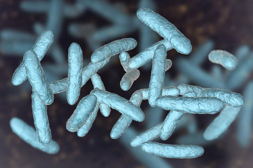 Pożyteczne bakterie jelit /©123RF/PICSEL