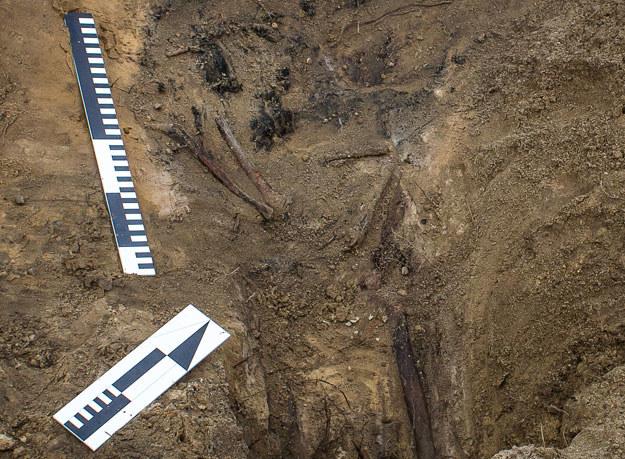 Prac ekshumacyjne trwają na terenie aresztu śledczego w Białymstoku (zdjęcie ilustracyjne) /Wojtek Radwański /AFP