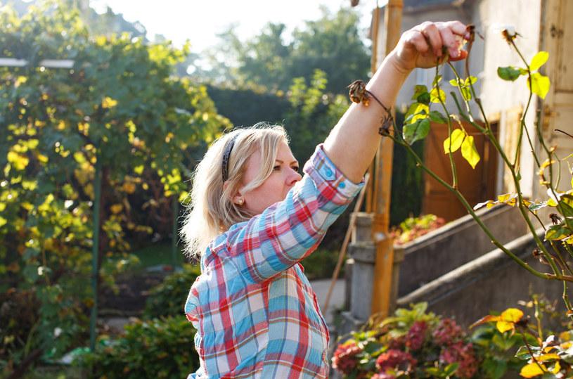 Praca w ogrodzie to prawdziwa przyjemność /123RF/PICSEL