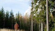 Praca w szwedzkich lasach