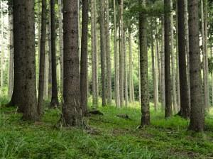 Praca więźniów. Osadzeni idą w lasy, będą je sprzątać