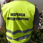 Pracownicy Inspekcji Weterynaryjnej alarmują: Niskie zarobki i braki kadrowe