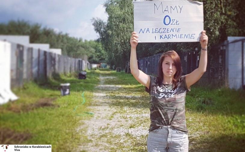 Pracownicy schroniska zwrócili się z dramatycznym apelem na Facebooku /Schronisko w Korabiewicach Viva /Facebook