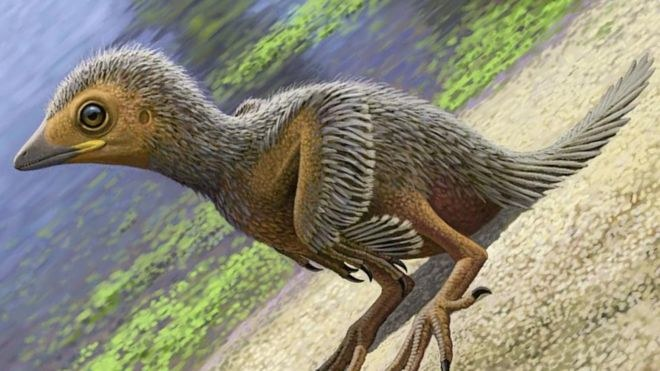 Prawdopodobnie tak wyglądał pisklak, którego skamieniałość znaleziono /materiały prasowe