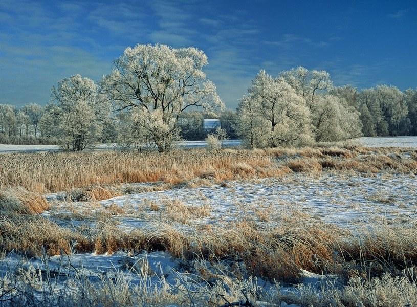 Prawdziwa zimowa aura /Piotr Płaczkowski /Reporter