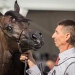Prawie 1,4 mln euro za konie na aukcji Pride of Poland w Janowie Podlaskim