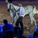 Prawie 1,4 mln euro za konie na aukcji w Janowie Podlaskim
