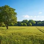 Prawo do pierwokupu nieruchomości leśnych do zmiany. Obrót ziemią droższy i bardziej skomplikowany