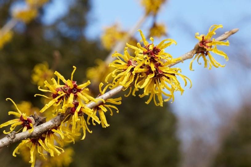 Pręcikowate kwiaty /©123RF/PICSEL