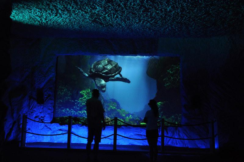Prehistoryczne oceanarium w Bałtowie /materiały prasowe
