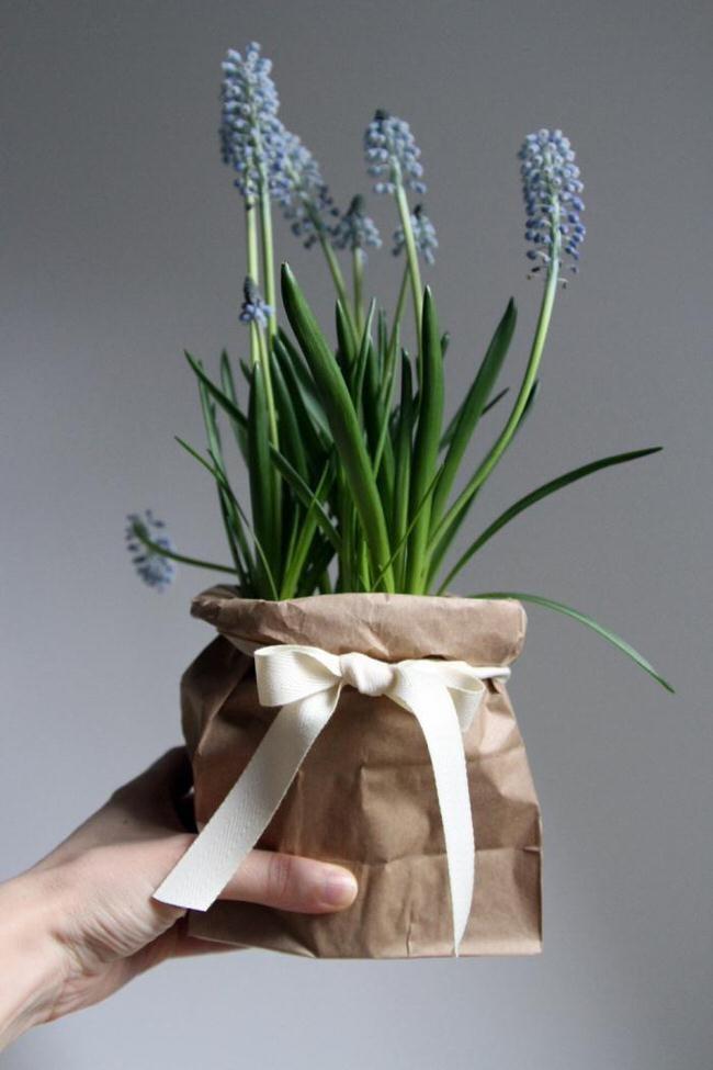 prezenty rośliny /© Photogenica