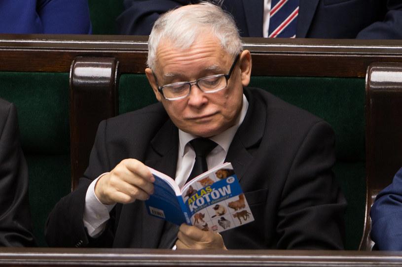 """Prezes PiS zaczytany w """"Atlasie Kotów"""" / Krystian Maj /Agencja FORUM"""