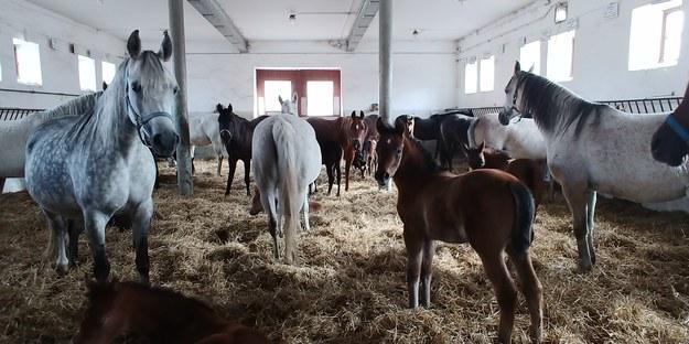 Prezes stadniny w Michałowie: Każdego dnia uczę się koni