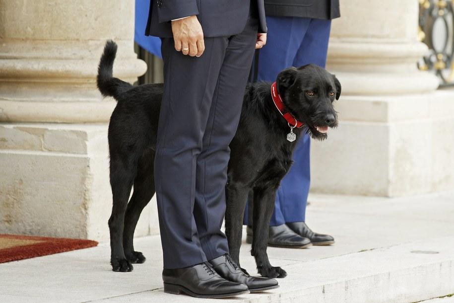 Prezydent Francji Emmanuel Macron przygarnął w weekend psa o imieniu Nemo /YOAN VALAT  /PAP/EPA