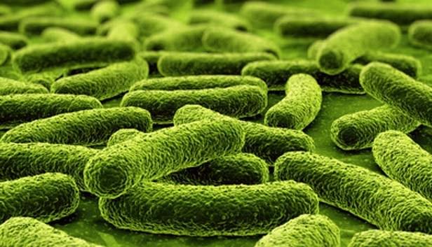 probiotyki nieszczelne jelita /© Photogenica