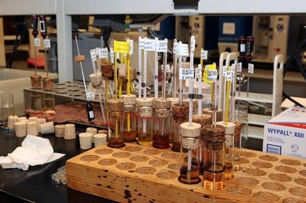 Próbki olejów /