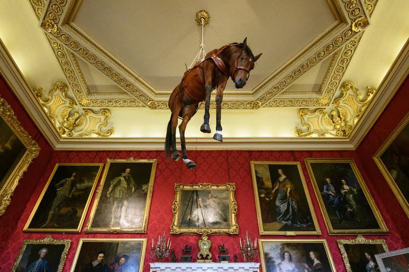 Problem śmierci zwierząt podejmują artyści. Maurizio Cattelana z wypchanym koniem zjeździł całą Europę, był także w Warszawie /Getty Images