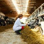 Producenci wołowiny walczą o rynkową pozycję