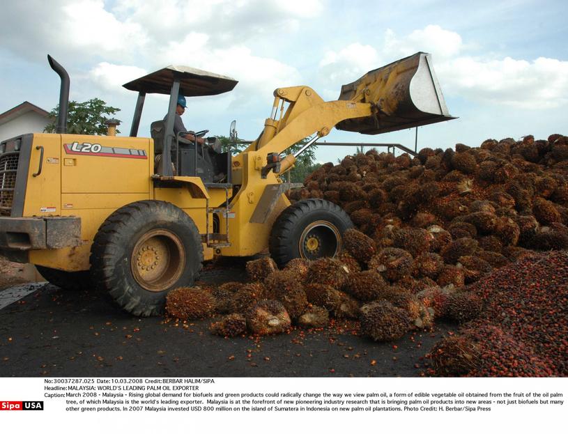 Produkcja oleju palmowego w Malezji