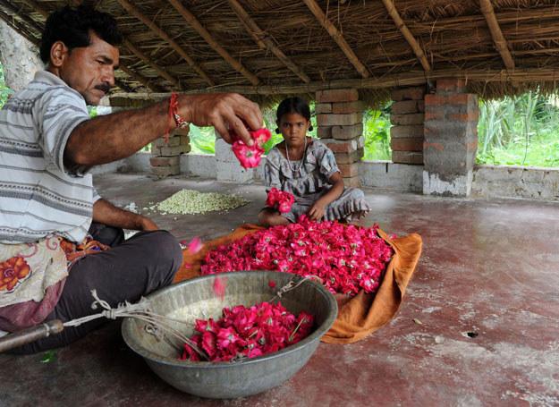 Produkcja perfum ma tu długą tradycję /AFP