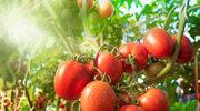 Produkty sezonowe - co i dlaczego jeść latem?