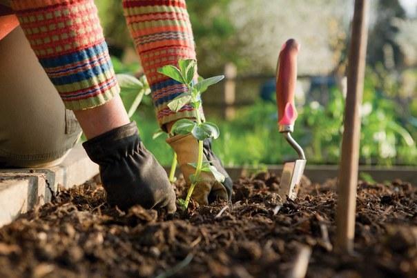 produkty użyźniające glebę /© Photogenica