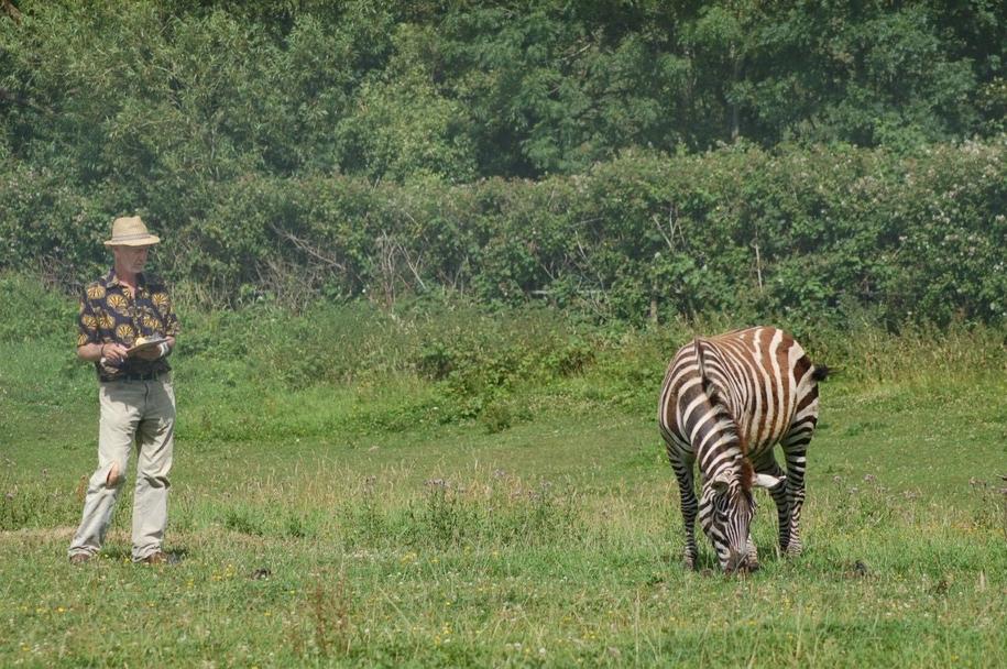 Prof. Tim Caro w czasie obserwacji, jak prawdziwa zebra opedza się od owadów /School of Biological Sciences, University of Bristol /Materiały prasowe